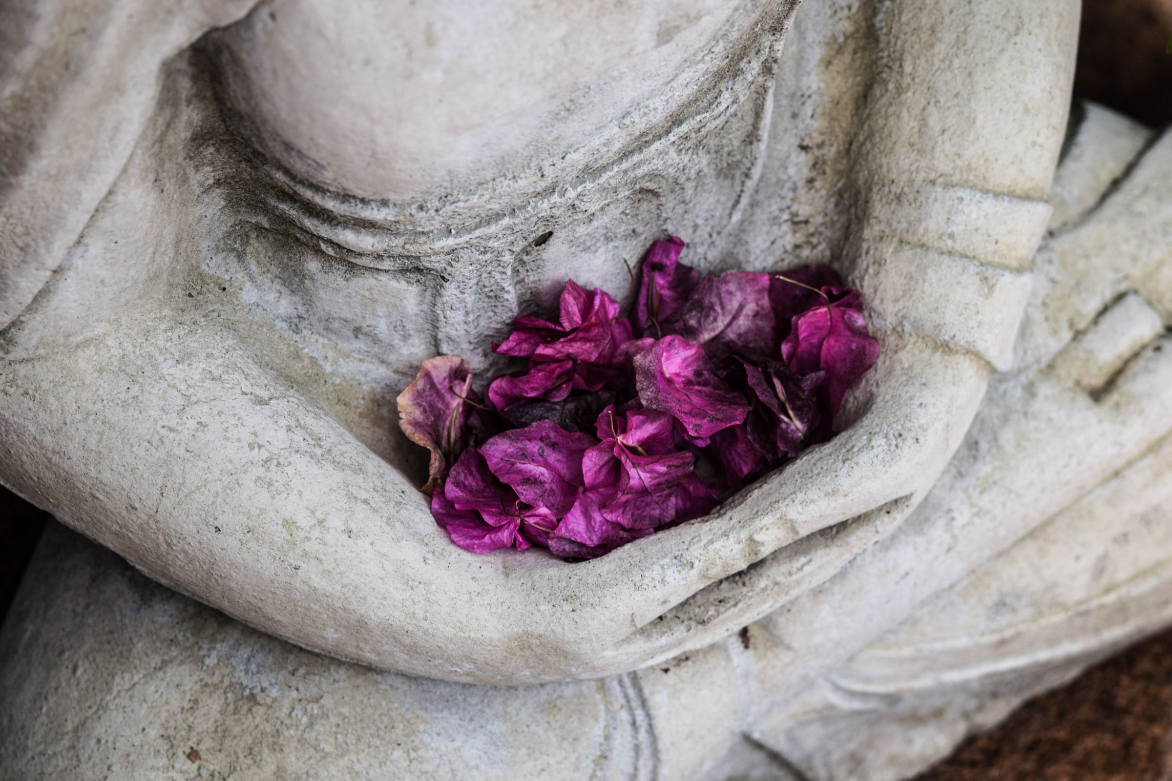 ClearLight Meditation Institute Buddha-with-flowers Programs